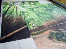 Фотообои дорога в даль