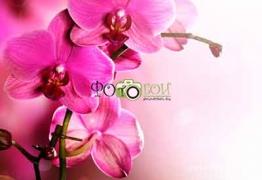 Картинки цветы и растения для фотообоев