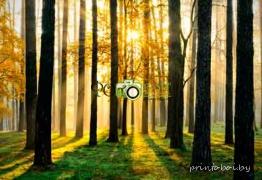 Картинки Природа для фотообоев
