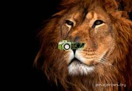 Картинки Животные для фотообоев